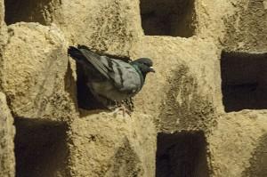 iran pigeon towers
