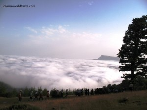 iran beautiful forests