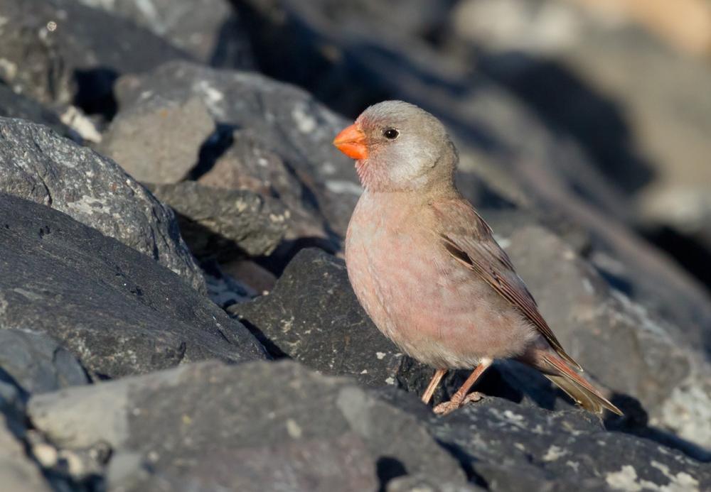 iran birdwatching tour