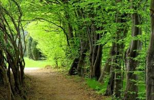 UNESCO Hyrcanian forest