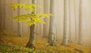 Hyrcanian forest tour
