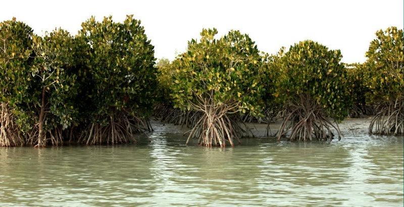 Hara forest-Qeshm Island, Persian Gulf